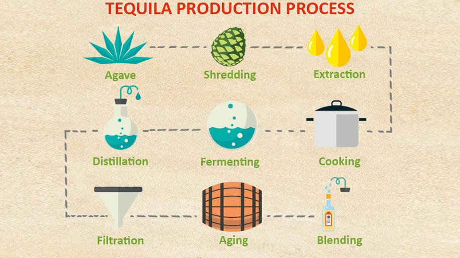 Sản xuất rượu Tequila